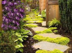 for Paths and Walkways Stepables: Perfect Plants for Paths and Walkways!Stepables: Perfect Plants for Paths and Walkways! Garden Edging, Garden Paths, Hill Garden, Small Gardens, Outdoor Gardens, Ground Cover Plants, Perfect Plants, Plantar, Yard Landscaping