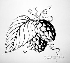 Images For > Hops And Barley Drawing