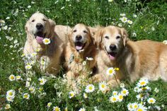 Shades of Golden among the Daisies ..Ben, Brie and Tyler