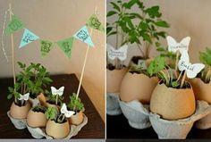 Egg shell flower pots