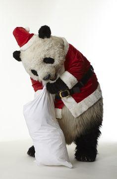 It's Panda Claus! get ready for christmas Panda Love, Red Panda, Cute Panda, Animals And Pets, Baby Animals, Cute Animals, Baby Panda Bears, Baby Pandas, Panda Party