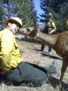 The Taylor Bridge wildfire in Washington scorched over 23,000 acres, leaving local deer searching for food. Most deer steered clear of firefighters working in the area, but one felt safe enough to approach Cody Ramstad to join him for an apple snack.