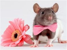 .gahhh! so cute!  No animal testing - modern alternatives are faster, cheaper and more accurate -and of course humane!