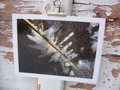 Eisige Kristalle im Flussbett, Oberammergau 2008  Abzug einer Originalfotografie, Format 13x18 nmit weißem Rand