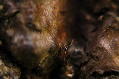 Florida Carpenter Ant Photo by Liliana Campozano-Arias — National Geographic Your Shot