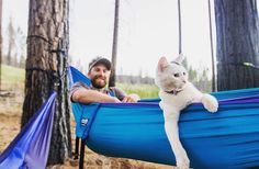 """This """"Camping With Cats"""" Instagram account is almost too cute to handle, but you should try anyway"""