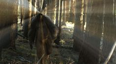 Is Bigfoot is an Invisible Killer?