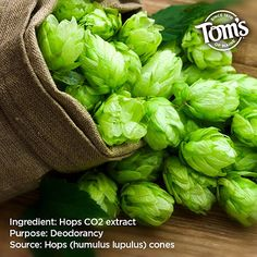 We use hops extract in some of our deodorants to help prevent odor. Healthy Living Tips, Deodorant, Maine, How To Apply, Personal Care, Science, Board, Nature, Naturaleza