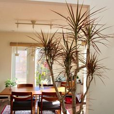 23825111 1853856584641957 3702853522501402624 n Backyard, Garden, Plants, Patio, Garten, Lawn And Garden, Backyards, Gardens, Plant