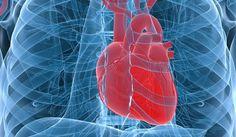 Stampato modello tridimensionale di un cuore umano con due tecniche d'imaging