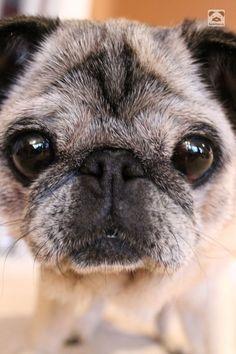 boodapug:  My monkey face. <3
