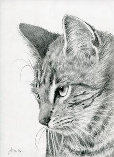 my new drawing Tabby Kitten