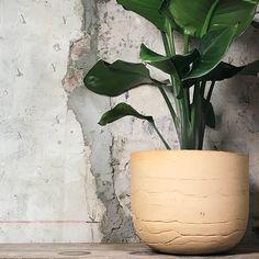 ODD STANDARD Blom XL Planter Pots