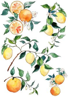 Citrus watercolour sketch | Inslee Fariss