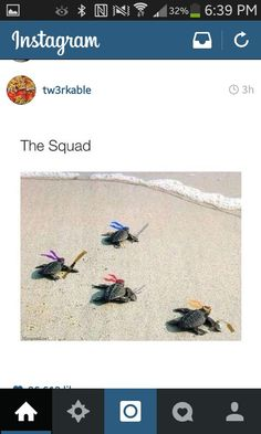 Aka, 5 seconds of summer. I don't know which version I like better. At least I can keep the turtles :)