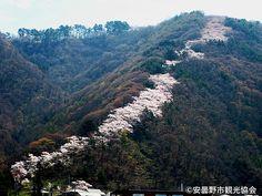 光城山の桜回廊(安曇野市観光協会提供)