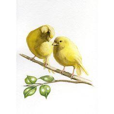 Kanarie vogels, 5 X 7 PRENTEN uit de originele aquarel schilderij, art... (€11) via Polyvore featuring home, home decor, watercolor bird paintings, giclee painting, bird wall art, bird home decor and watercolor painting