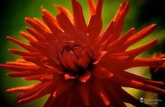 nice Fotografie »o. T. 18 @ Flowers«,  #Blumen