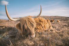 Wildlife Photography Bear By Arankadelina - Full Image Lion Live Wallpaper, Live Wallpapers, Wildlife Photography, Animal Photography, Daily Inspiration, Design Inspiration, Herd Of Elephants, Natural World, Animal Kingdom