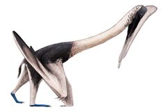 Feilongus < Ctenochasmatidae. Feilongus is most closely related to the contemporaneous Moganopterus within the boreopterids. Boreopterids were in turn found to be closely related to the aerial fishers known as ornithocheiroids. Feilongus is also close to the gallodactylids. Feilongus is a gnathosaurine ctenochasmatid. The ctenochasmatids are a diverse lineage of suspension feeding pterosaurs that were common in fresh water and marine environments from the Late Jurassic to the Early…