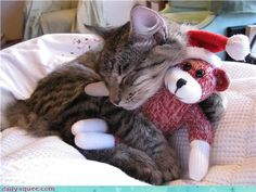 cat,cute,nap,sleep