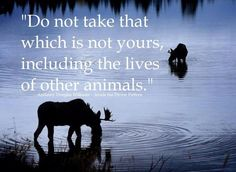 Do not take that which is not yours, including the lives of other animals.