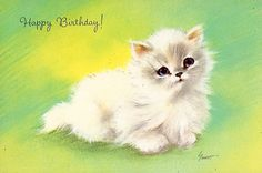 fluffy white birthday kitten