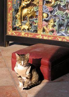 Cat in Temple - Cheung Chau, Hong Kong