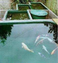 Koi Fish Information,Koi Care,Pond Filtration , Koi pond design and pond filter Koi Fish Care, Koi Fish Pond, Fish Ponds, Koi Pond Pumps, Koi Fish Colors, Koi Pond Design, Garden Design, Water Fountain Design, Pond Filters