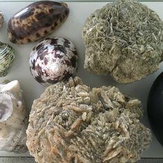 Verzameld tijdens mijn reizen/collected during my travels. #reizen #ekster #verzameling #verzamelaar #schelpen #stenen #zeesterren #koehoren #haaientand #schildpad #fossielen #stekelvarken #bergkristal #travels #travelling #collection #souvenirs #magpie #sharktooth #fossils #stones #shells  #porcupine #turtleshell #cowhorn #starfish #rockcrystal