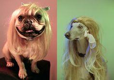 Hunde mit Perücken! | VICE