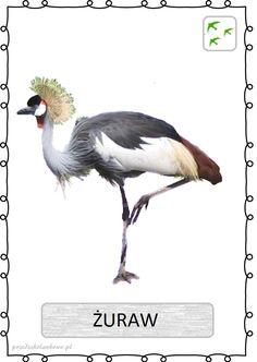 Learning Time, Montessori, Birds, Animals, Natural, Animales, Animaux, Bird, Animal