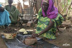 Czy wiesz, że drzewo Masłosz Parka zaczyna owocować dopiero po 25-30 latach, wydając owoce podobne kształtem do śliwki. Tradycyjny sposób powstawania masła Shea przebiega bez użycia składników chemicznych i nie zmienia się od wieków. Masło Shea wytwarzają wyłącznie kobiety, obyczaj zakazuje bowiem mężczyznom dotykać drzewek w każdym przypadku poza wycinką. www.masloshea.org #maslo_shea #maslo_karite #maslo_shea_nierafinowane #maslo_shea_na_twarz