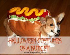 Getting your Halloween costumes on a budget is doable and actually pretty easy.
