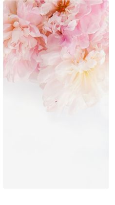 White Wallpaper Iphone, Floral Wallpaper Phone, Pink Flower Wallpaper, White Roses Wallpaper, Iphone Wallpaper Summer, Walpaper Phone, Dandelion Wallpaper, Peach Wallpaper, Pretty Phone Wallpaper