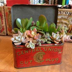 Repurposed Containers For Your Houseplants - clever ideas for using what you have to hide ugly plastic flower pots - via Cottage Northwest: Thinking Outside the Pot