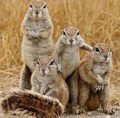 Prairie Dog Family Photo at Squirrel Studio Animals And Pets, Baby Animals, Funny Animals, Cute Animals, Animal Babies, Wild Animals, Beautiful Creatures, Animals Beautiful, Tier Fotos