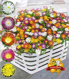 Simple Balkonkastenhalter Wei cm cm dimensional verstellbar Products and