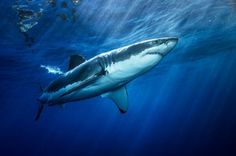 Shark Safety Tips: Sorting Out Fact From Fiction | IFLScience