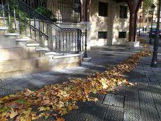 El camino de hojas amarillas. 3 Planeta Bilbao.