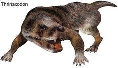 thrinaxodon - Triassic (156 - 145 mln)