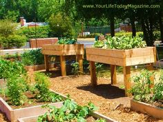 Love the table-height raised garden beds.:
