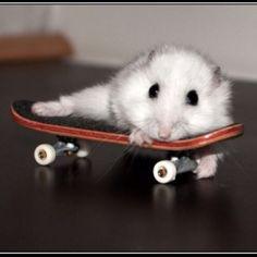I have this exact dwarf hamster....I love them.....sooooo cute...they are sooooo friendly