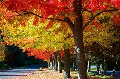 Washington - Autumn in the United States Best of Web Shrine