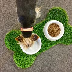 This trendy grass mat locally made by the folks at Always Greener OKC is just what your pups need! Here's the details: Synthetic fescue green grass, pile, H x 26 Best Artificial Grass, Fake Turf, Faux Grass, Grass Stains, Small Backyard Patio, Dog Food Recipes, Dogs, Green Grass, Dog Stuff