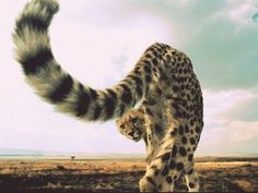 Tail.
