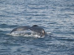Whale watch..