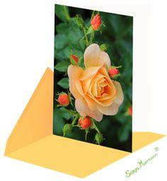 Die Rosenkarte bezaubert durch ihre wunderschönen Farben. Die Glückwunschkarte ist ohne Text und eignet sich z.B. als Geburtstagskarte, Dankeskarte oder auch als Genesungskarte. Meditation, Flowers, Plants, Thanks Card, Joie De Vivre, Birth, Colors, Nice Asses, Florals