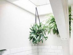 In fact, indoor plants not only help clean the environment around them, but they act as a quick decorating tool.