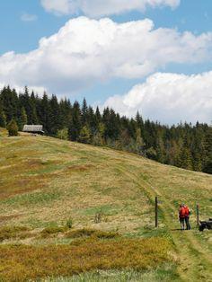Dolina Gorcowego Potoku - Weselakowa i Spółka Polish Mountains, Nature, Travel, Viajes, Traveling, Nature Illustration, Off Grid, Trips, Mother Nature